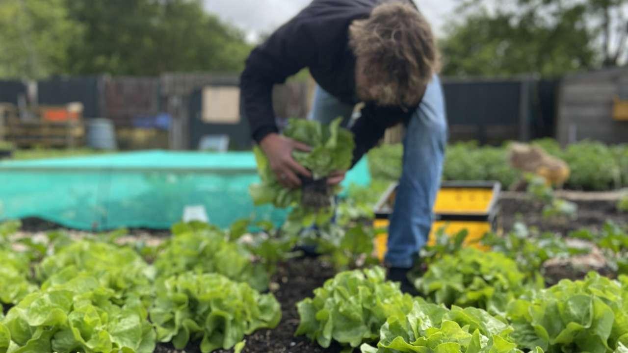 Onze eigen groentetuin - Onder de Pannen