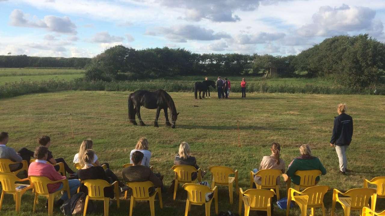 Groepsessie coaching met paarden