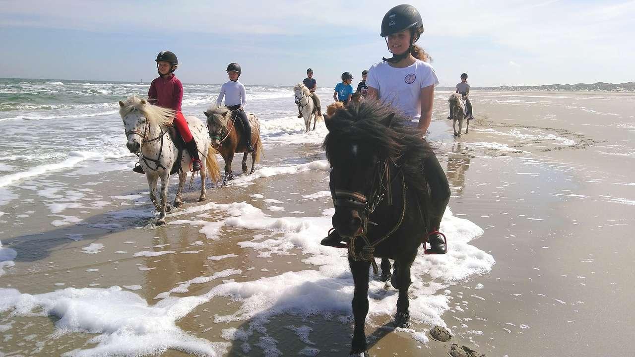 Met de paarden naar het strand op Terschelling