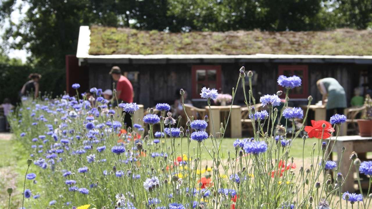Verschillende kleuren bloemen in het veld